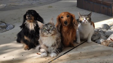 Photo of two dogs and two cats.